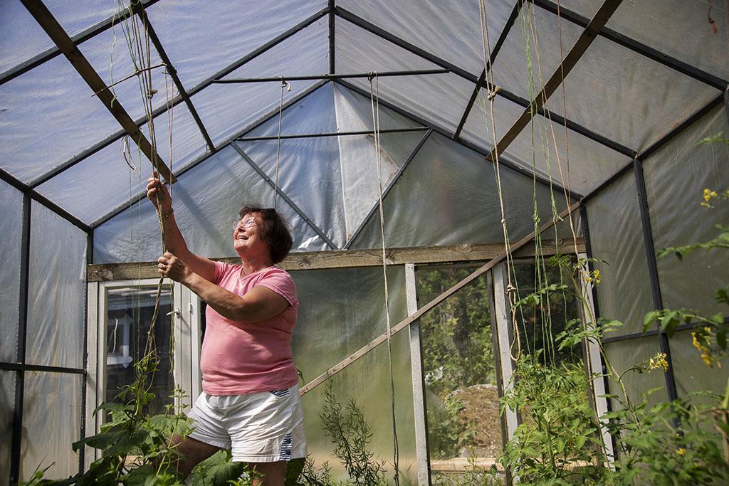 Nainen kasvihuoneessa ripustamassa naruja kasveille.